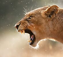 Lioness displaying dangerous teeth by johanswanepoel