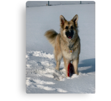 Snow Fun! Canvas Print