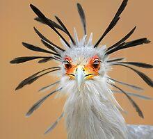 Secretary bird portrait close-up by johanswanepoel