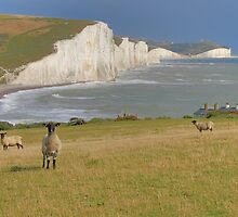 Sheep and the Seven Sisters - HDR by Colin  Williams Photography