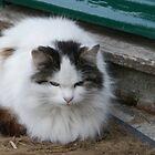 Kitty On The Mat........... by lynn carter