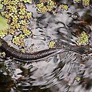 Snake on the Water  by John  Kapusta
