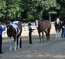 Deer Run Horse Show Club Sept. 20, 2014 (43) by DLitefulImagery