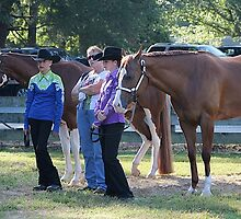 Deer Run Horse Show Club Sept. 20, 2014 (80) by DLitefulImagery