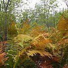 Fall Ferns by Martha Medford