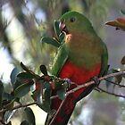 Female King Parrot by jansimpressions