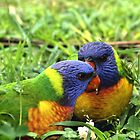 Lorikeets by jansimpressions