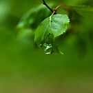 The Last Droplet by boxx2genetica