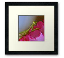 Posing Mantis Framed Print
