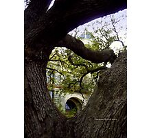 The Hanging Tree in Goliad, Texas Photographic Print