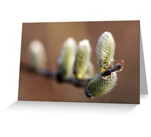 Reaching Out for Springtime  Greeting Card