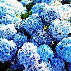 Blue flowers all summer  by sebmcnulty