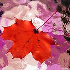 Autumn Maple Leaf ~ on Abstract by SummerJade