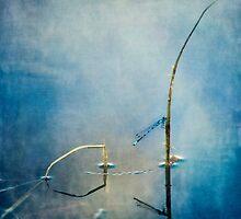 A quiet moment by Priska Wettstein