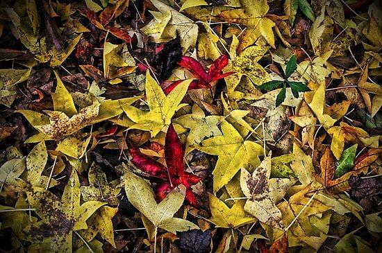 Fallen Leaves by TonyCrehan