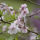 Blossoms at Spring Bluff by Jessica Fittock