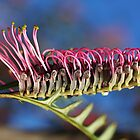 Stand Tall and be Counted- Grevillea Flower by Joy Watson