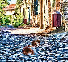 Dog on old small street by Benjamin Gelman