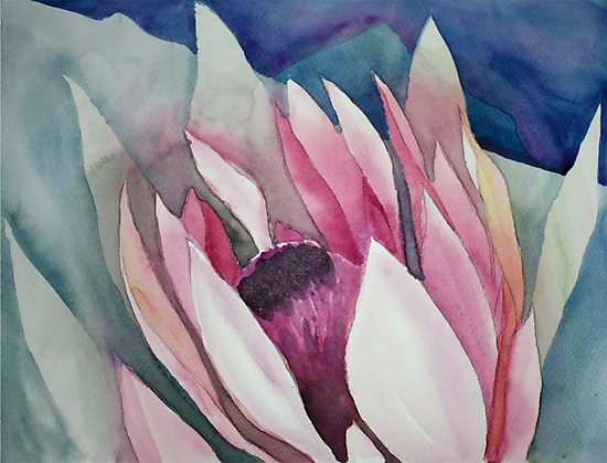 Protea  - Kirstenbosch Gardens with view of Devil's Peak by Claudia Dingle