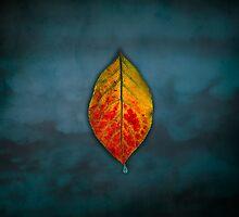Floating leaf on Blue Sky by Irene Liebler