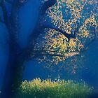 Artscape......Pointillism......The perfect Light by Imi Koetz
