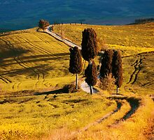 Golden fields of Toscany by JBlaminsky