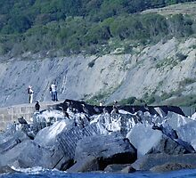 Cormorants On The Rocks............ by lynn carter
