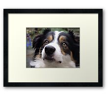 The Charm of Laddie. Framed Print