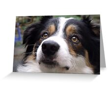 The Charm of Laddie. Greeting Card