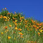 Poppy Flowers Meadow Blue Sky Green Hillside Art by BasleeArtPrints