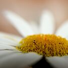 Everything is Coming Up Daisies by aprilann