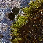 Composition in Rock and Lichen by Yampimon