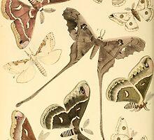 butterflies by Krzyzanowski Art
