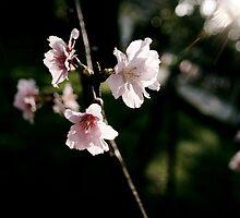 say hi to spring by hsinjuhsu