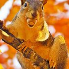 Gathering Nuts by lorilee