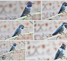 COLLAGE OF BLACK CHINNED HUMMINGBIRD by JAYMILO