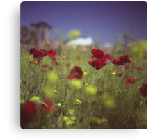 Red wild flowers poppies on hot summer day in urban city wasteland Hasselblad square medium format film analogue photo Canvas Print