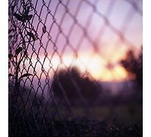 Wire fence and foliage on summer evening  in Spain square medium format film analogue photo Photographic Print