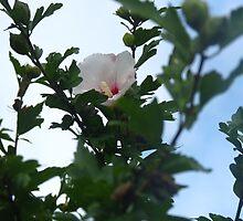Flower 2 by jenglish58