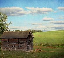 Abandoned old shed by vigor