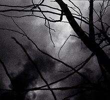 Tree branches in silhouette against winter sky black and white silver gelatin 645 medium format film analog photo by edwardolive