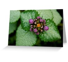 Growing in the Garden   ^ Greeting Card