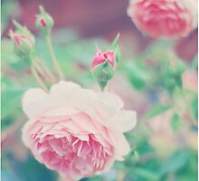 Pastel Roses by Indea Vanmerllin