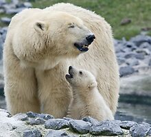 Polar love by hanspeters