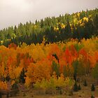 Fall in the Colorado Rockies (2) by dfrahm