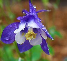After the rain falls. by Jennifer Bishop