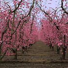 Walking into spring by MarthaBurns
