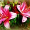 *Pink Lilies (NO MACRO) - Gorgeous Flower Cards*