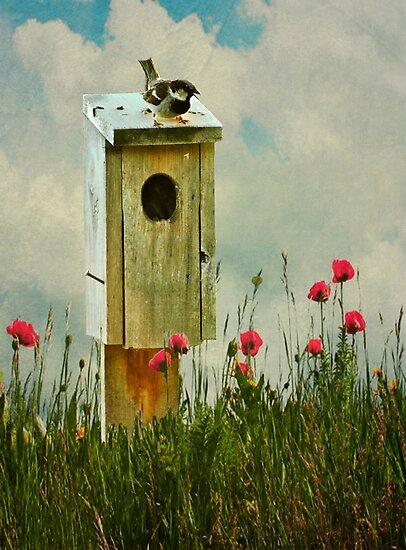 The Sparrow... by Karen  Helgesen
