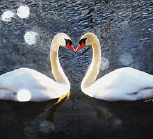 """LOVE~ly"" Swans by Barbny"